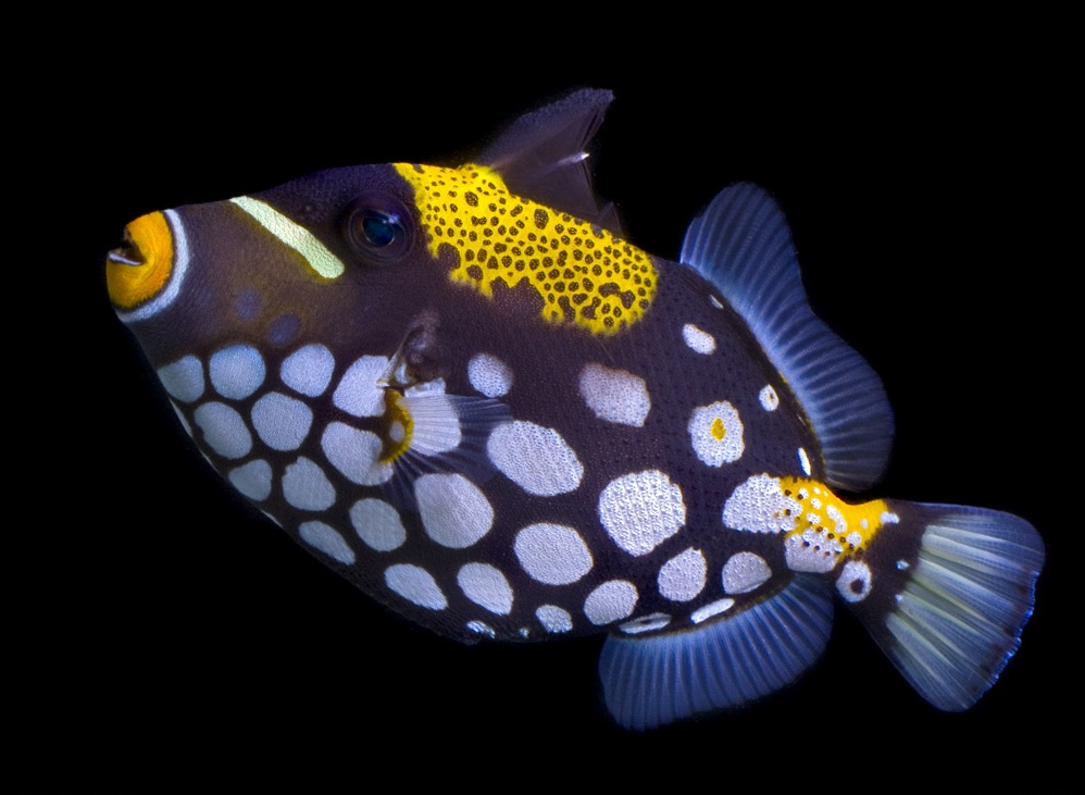 Top 10 Most Beautiful Fish In The World Top 10