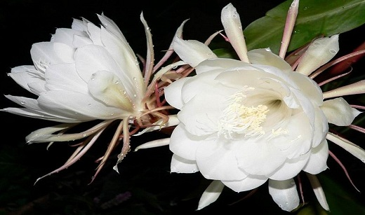 Top 10 Rarest Beautiful Flowers In The World